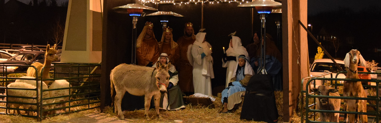 Live nativity animals in Lexington, KY