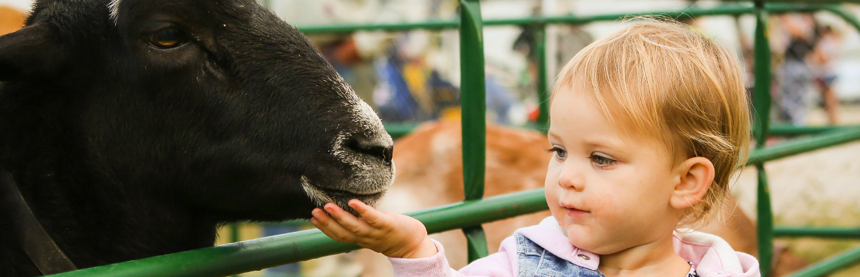 Teach kids about farm animals with a petting zoo.