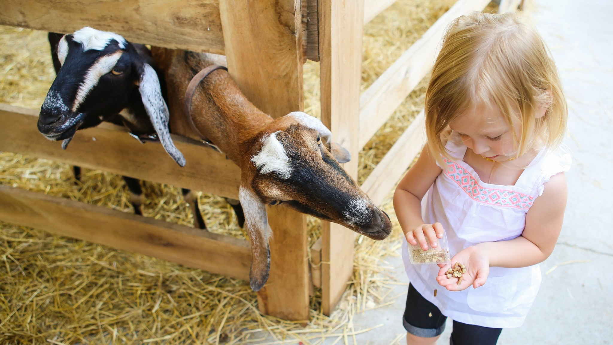 The petting zoo at Kings Island will return in 2017.
