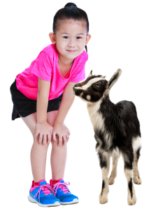 Travelling petting zoos that visit schools in lexington, louisville, cincinnati, dayton and northern kentucky.