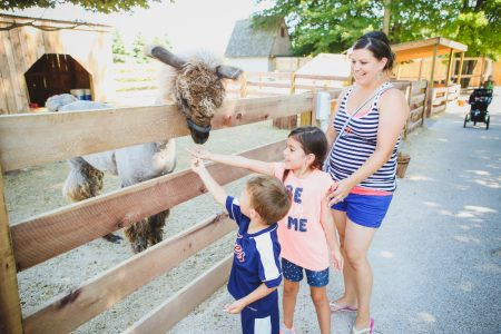 The Petting zoo animals at Michigan's Adventure
